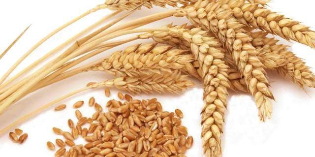 wheat-seed-1878367